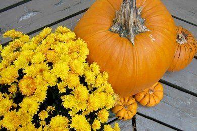 10 Healthy Halloween Ideas